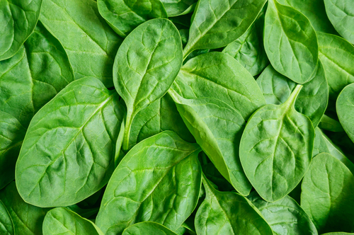 how to grow spinach in south australia