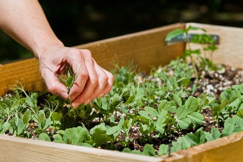 [How to] Build a Raised Bed for Your Veggies and Plants | 1 Million Women