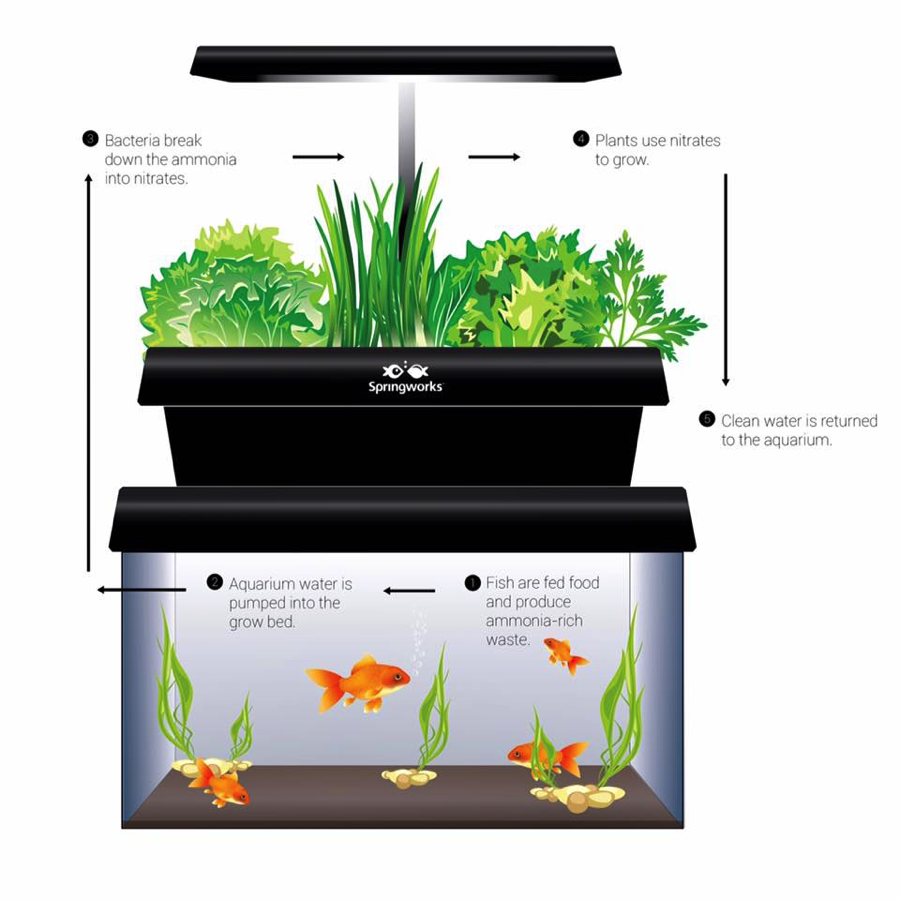 What are aquaponics and why are they so important for the ...