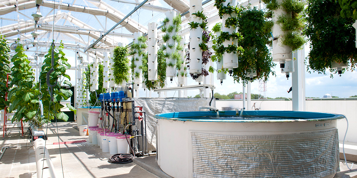 How The Hell Does Aquaponics Work 1 Million Women