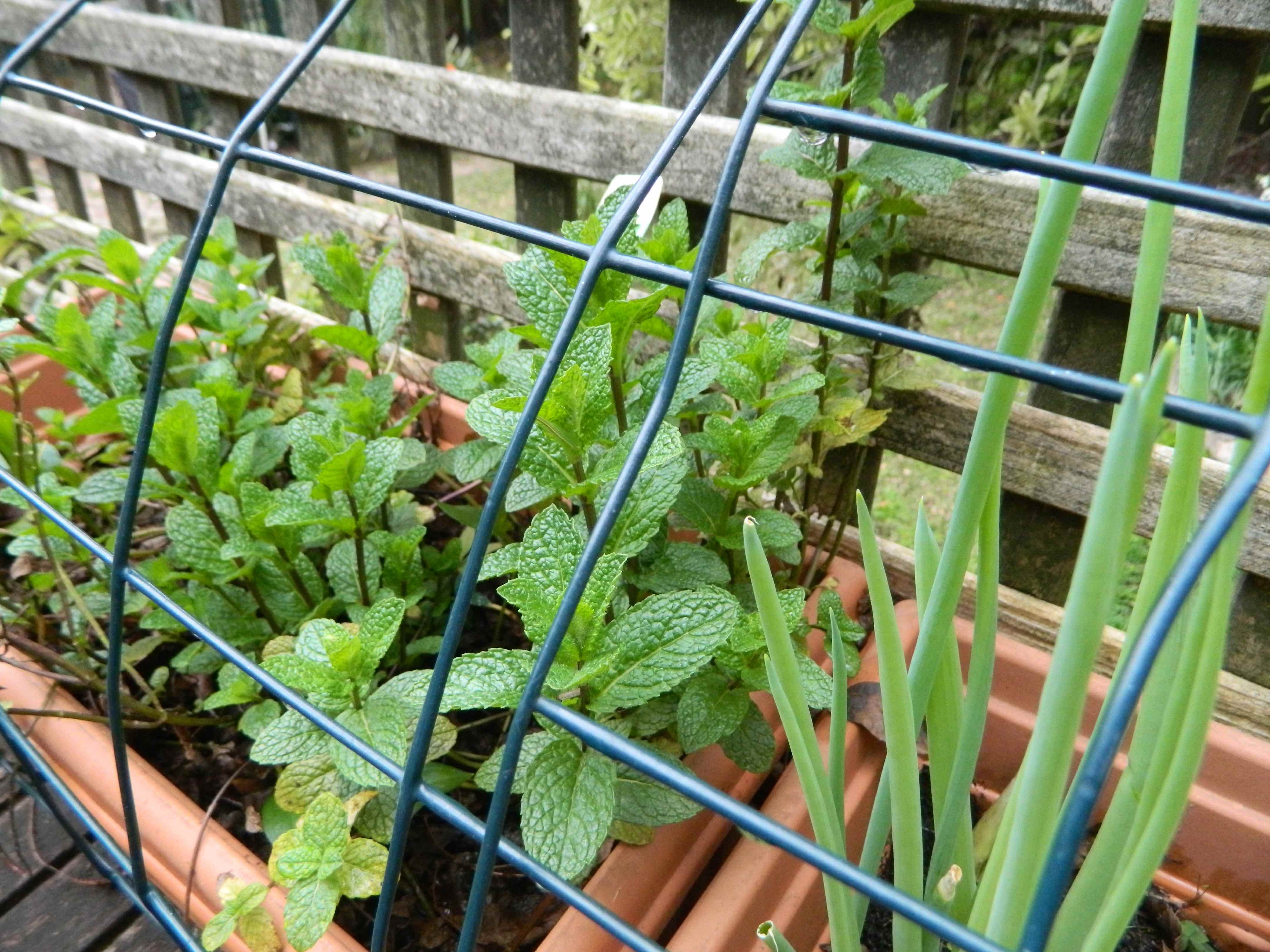Diy protect your plants with this easy possum shield for Easy to keep garden plants