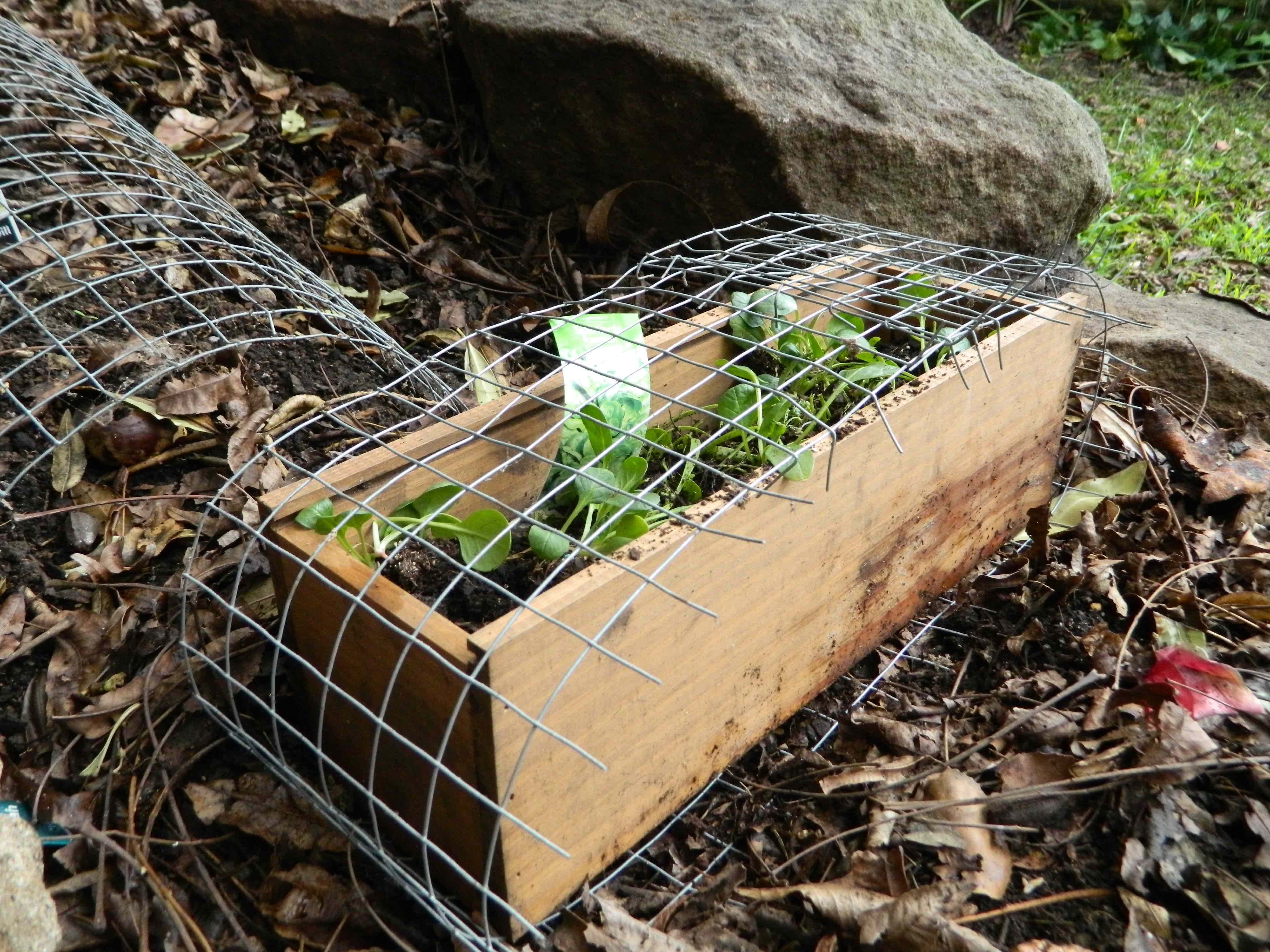 DIY] Protect your plants with this easy possum shield! | 1