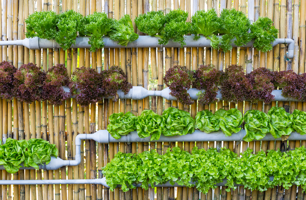 as we tackle the global climate crisis and struggle with the ramifications of a growing population urban gardening is a great way to act individually on - Urban Garden